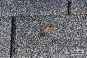 hail damaged roof shingle